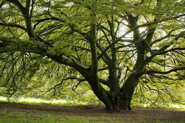 Branching by RitterRunkel