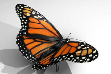 Monarch Butterfly by dudecon
