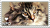 I love Norwegian Forest Cats by WishmasterAlchemist