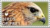 I love Birds of Prey by WishmasterAlchemist