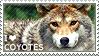 I love Coyotes by WishmasterAlchemist