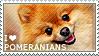 I love Pomeranians by WishmasterAlchemist