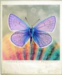 Fly like a Rainbow by WishmasterAlchemist