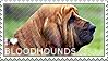 I love Bloodhounds by WishmasterAlchemist