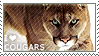 I love Cougars by WishmasterAlchemist