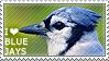 I love Blue Jays by WishmasterAlchemist
