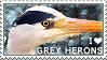 I love Grey Herons by WishmasterAlchemist