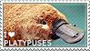 I love Platypuses by WishmasterAlchemist