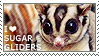 I love Sugar Gliders by WishmasterAlchemist