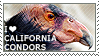 I love California Condors by WishmasterAlchemist