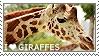 I love Giraffes by WishmasterAlchemist