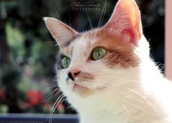 Through a Cat's Eyes by WishmasterAlchemist