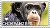 I love Chimpanzees by WishmasterAlchemist