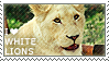 I love White Lions by WishmasterAlchemist