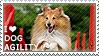 I love Dog Agility by WishmasterAlchemist