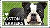 I love Boston Terriers by WishmasterAlchemist
