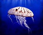 Creature of the Sea by WishmasterAlchemist