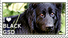 I love Black German Shepherds by WishmasterAlchemist