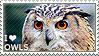 I love Owls by WishmasterAlchemist