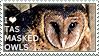 I love Tasmanian Masked Owls by WishmasterAlchemist