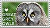 I love Great Grey Owls by WishmasterAlchemist