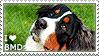 I love Bernese Mountain Dogs by WishmasterAlchemist