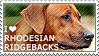 I love Rhodesian Ridgebacks by WishmasterAlchemist