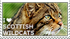 I love Scottish Wildcats by WishmasterAlchemist
