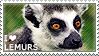 I love Lemurs by WishmasterAlchemist