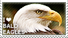 I love Bald Eagles by WishmasterAlchemist