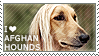I love Afghan Hounds by WishmasterAlchemist