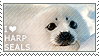 I love Harp Seals by WishmasterAlchemist