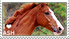 I love Australian Stock Horses by WishmasterAlchemist