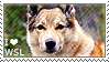 I love West Siberian Laikas by WishmasterAlchemist