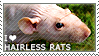I love Hairless Rats by WishmasterAlchemist