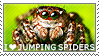 I love Jumping Spiders by WishmasterAlchemist