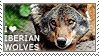 I love Iberian Wolves by WishmasterAlchemist