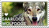 I love Saarloos Wolfdogs by WishmasterAlchemist