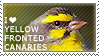 I love Yellow-fronted Canaries by WishmasterAlchemist