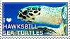 I love Hawksbill Sea Turtles by WishmasterAlchemist