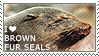 I love Brown Fur Seals by WishmasterAlchemist