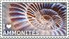 I love Ammonites by WishmasterAlchemist