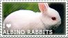 I love Albino Rabbits by WishmasterAlchemist