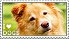 I love Dogs by WishmasterAlchemist