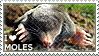 I love Moles by WishmasterAlchemist