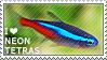 I love Neon Tetras by WishmasterAlchemist
