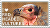 I love Red-headed Vultures by WishmasterAlchemist