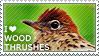 I love Wood Thrushes by WishmasterAlchemist
