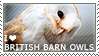 I love British Barn Owls by WishmasterAlchemist