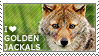 I love Golden Jackals by WishmasterAlchemist